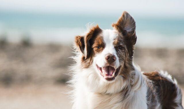 Gør din hund glad med det rette hundebur