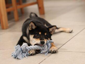 Får din hund det rette kosttilskud?