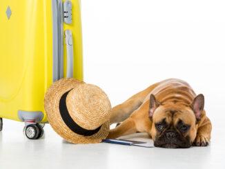 Det er en god idé med en transportkasse til din hund, når den skal med på farten